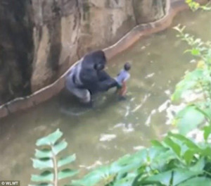 Γορίλας τραβάει και σέρνει 4χρονο αγοράκι σε ζωολογικό κήπο (photo)