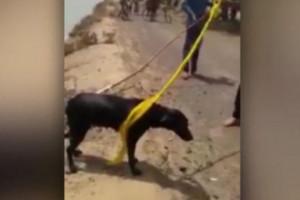 Άνδρας σώζει σκύλο από πνιγμό... με ένα μαντήλι (video)
