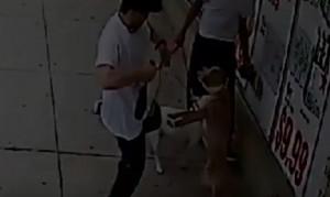 Δύο... ζώα βασανίζουν σκυλιά με απίστευτο τρόπο (video)