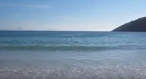 Δελφίνια βγήκαν στην αμμουδιά. Ανθρωποι τα βοήθησαν και... άλλοι έβγαζαν φωτογραφίες (video)