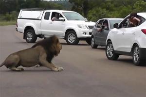 Να γιατί δεν πρέπει να βγάζεις το κεφάλι σου έξω από το αυτοκίνητο! (vid)