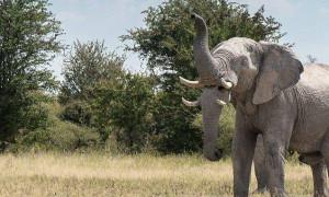 Σας φαίνεται τίποτα περίεργο στη φωτογραφία αυτού του ελέφαντα; (Photo)