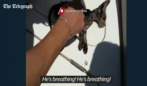 Ενας άντρας έκανε σε πνιγμένη γάτα το φιλί της ζωής και την επανέφερε... (video)