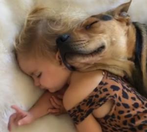 Λυκόσκυλο κοιμάται... αγκαλιά με κοριτσάκι και μαζί ρίχνουν το διαδίκτυο (video)