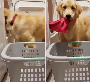Σκύλος έβαλε πλυντήριο για να διευκολύνει την άρρωστη ιδιοκτήτρια του (video)