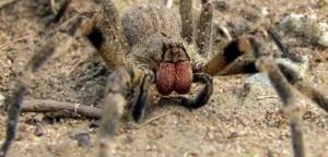 Οι 12 μεγαλύτερες αράχνες του κόσμου (video)