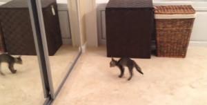 Γάτα βλέπει την αντανάκλασή της στον καθρέπτη και... (vid)