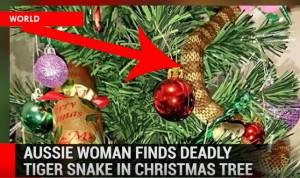 Κι εκεί που στόλιζε το χριστουγεννιάτικο δέντρο, τι πετάχτηκε; Ενα... (video)
