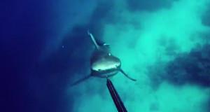 Απίστευτη επίθεση καρχαρία σε δύτη που κόβει την ανάσα! (vid)