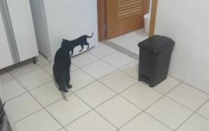 Γάτα παθαίνει... πλάκα με γάτα... τοίχου (Video)