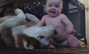Θα λιώσετε με το παιχνίδι ενός μωρού με ένα τεράστιο χάσκι (video)