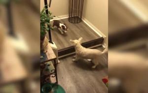 O... μεγάλος δείχνει στο κουτάβι πώς να κατεβαίνει τα σκαλιά (video)