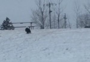 Είδαν ένα αετό να κάθεται στο χιόνι! Δεν φαντάζονταν τι θα γινόταν όταν πετούσε... (video)