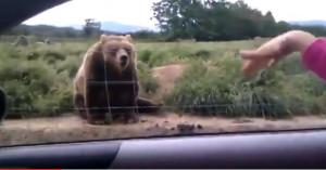Ενα ζευγάρι είδε μια αρκούδα στο δρόμο και την χαιρέτησε! Αυτό που έκανε η αρκούδα δεν θα το ξεχάσουν ποτέ (Video)