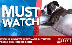 Σκυλίτσα έμεινε έγκυος, αλλά την ώρα της γέννας άφησε... άφωνο τον ιδιοκτήτη της (video)