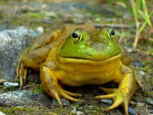 Κάνε το τεστ και μάθε: Μήπως σκέφτεσαι σαν... βάτραχος;