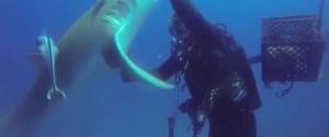 """Καρχαρίας """"ζητά"""" βοήθεια από δύτη για να του αφαιρέσει το αγκίστρι! (video)"""