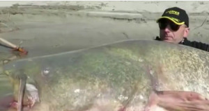 Ψαράς έπαθε... αμόκ όταν διαπίστωσε τι ψάρι είχε πιάσει με το καλάμι του (Video)