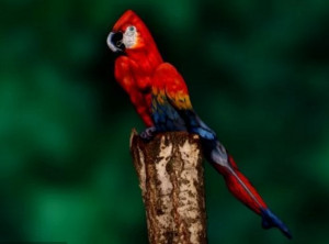Πιστεύετε ότι βλέπετε έναν παπαγάλο στη φωτό; Προσέξτε την πιο καλά... (Photo)