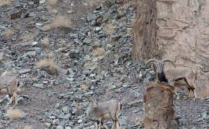 Μπορείς να βρεις τη λεοπάρδαλη στη φωτογραφία;