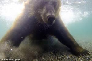 Αρκούδα ψαρεύει σολωμό και κόβει την ανάσα (video)