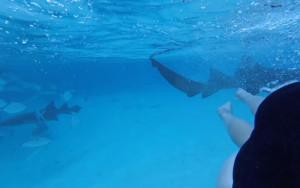 Κολυμπούσε και νόμιζε πως της έκανε φάρσα ο άντρας της. Η αλήθεια ήταν τρομακτική... (Video)
