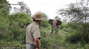 Ελέφαντας ορμάει σε γκρουπ και ο ξεναγός μένει ψύχραιμος (video)