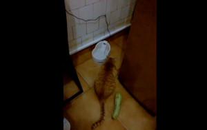 Αυτή η γάτα είδε πίσω της ένα κολοκύθι – Η συνέχεια θα σας ξαφνιάσει… (video)