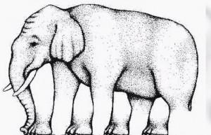 Θα καεί το μυαλό σας! Πόσα πόδια έχει αυτός ο ελέφαντας; (Video)