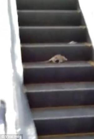 Πελάτες ήρθαν αντιμέτωποι με ποντίκια σε μαγαζί (video)