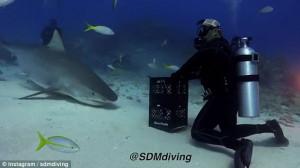 Παίζει με καρχαρία μέσα στον ωκεανό χωρίς προστατευτικό και σοκάρει