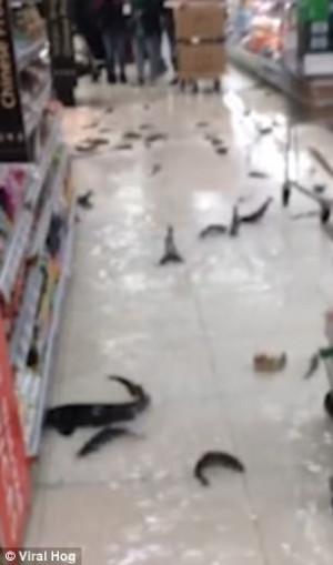 Ενυδρείο έσπασε μέσα σε σούπερ μάρκετ και γέμισαν ψάρια (video)