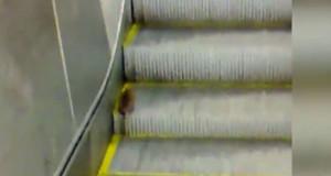 Αρουραίος επιχειρεί να ανεβεί κυλιόμενη σκάλα! Θα τα καταφέρει; (video)