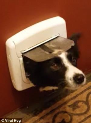 Σκύλος έβαλε το πρόσωπο του στην είσοδο γάτας και το ευχαριστήθηκε (video)