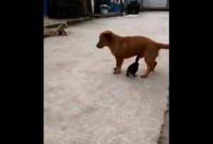 Απίστευτη επίθεση πάπιας σε σκύλο με στόχο το... (video)
