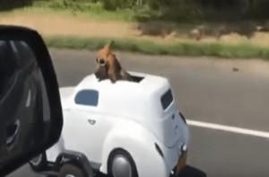 Η απίστευτη πατέντα του για να παίρνει το σκύλο του βόλτα με τη μηχανή! (video)