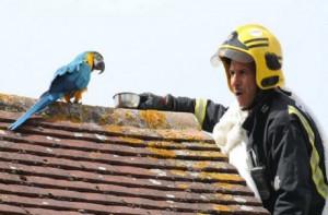 Επικό: Παπαγάλος έβρισε πυροσβέστες που πήγαν να τον σώσουν!