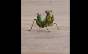 Απίστευτο... Εχετε δει ποτέ έντομο να... χτενίζεται; (video)