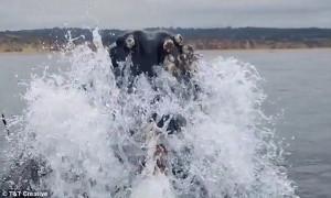 Φάλαινα περνάει δίπλα από βάρκα! (video)