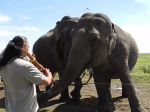 «Μαγικός αυλός» κάνει ελέφαντα να λικνίζεται με τρόπο πέρα από κάθε φαντασία (video)