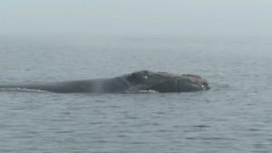 Πόσο ψύχραιμος μπορείς να είσαι αν δεις κάτι τέτοιο στη θάλασσα; (video)