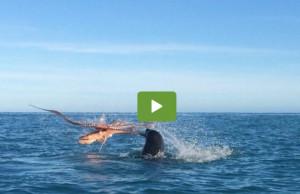 Δεν είναι μοντάζ! Γιγαντιαίο χταπόδι παλεύει για τη ζωή του με φώκια (video)