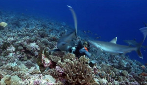 Δύτης δέχεται επίθεση από καρχαρία στο κεφάλι! Δείτε την αντίδρασή του... (video)