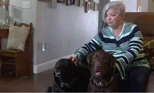 Συγκινητικό! Σκυλιά έσωσαν την ιδιοκτήτριά τους μετά από εγκεφαλικό (photos+video)