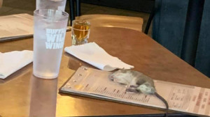 Τρομερό! Ζωντανός αρουραίος έπεσε σε τραπέζι πελάτη! (photos+video)