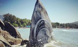Οπτική ψευδαίσθηση ή πραγματικότητα; Επίθεση καρχαρία σε παραλία; (photos)