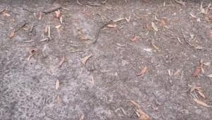 Βγήκε στον κήπο του σπιτιού του και έπαθε σοκ με αυτό που είδε (video)