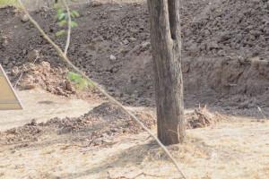 Η φωτογραφία που τρελαίνει το διαδίκτυο: Μπορείς να βρεις την λεοπάρδαλη; (photos)