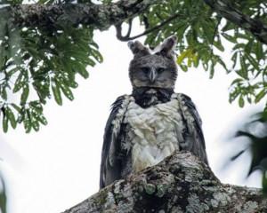 Οι φωτογραφίες που σαρώνουν τα social media! Πραγματικός αετός ή αποκριάτικο κοστούμι; (photos)