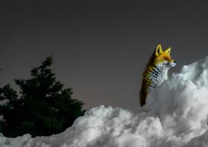 Καιρός: «Πάρνηθα από τα παλιά...»! Απίθανες φωτογραφίες από τη χιονισμένη κορυφή της (photos)